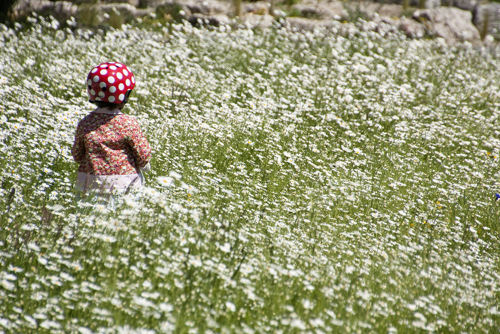 Turnham Green Wild Flowers.jpg