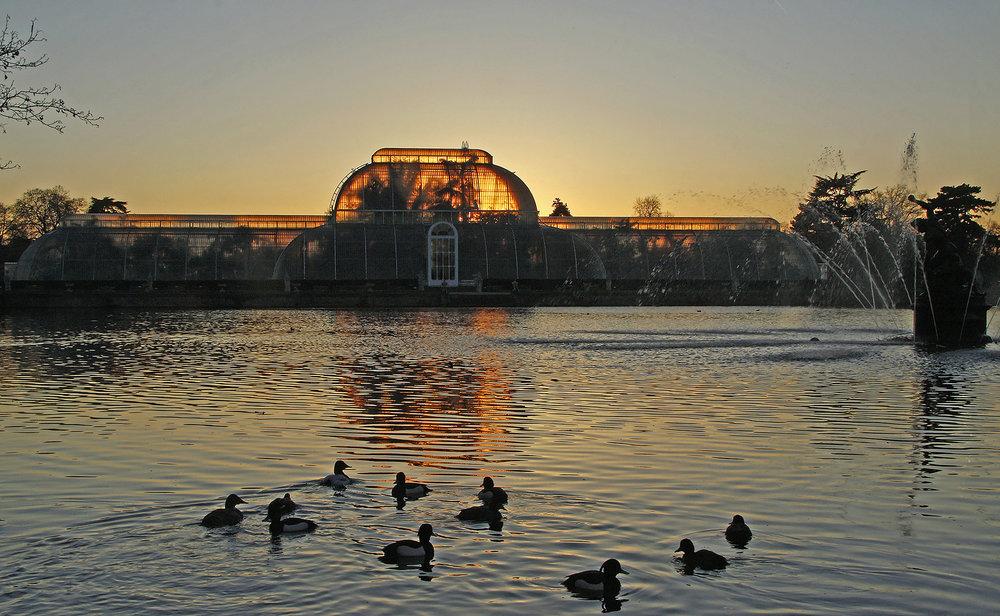 The Palm House at dusk WR.jpg