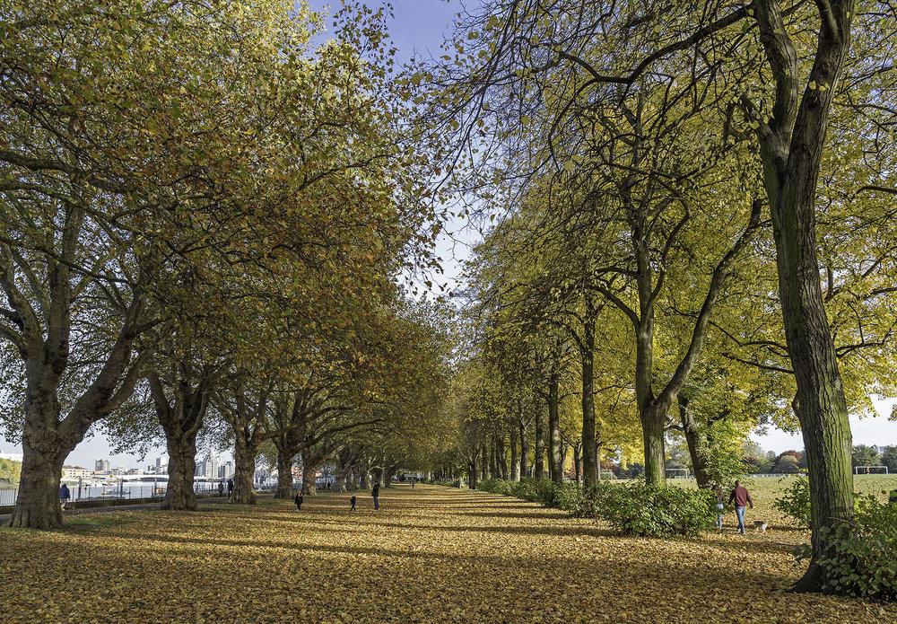 Wandsworth Park in autumn WR.jpg