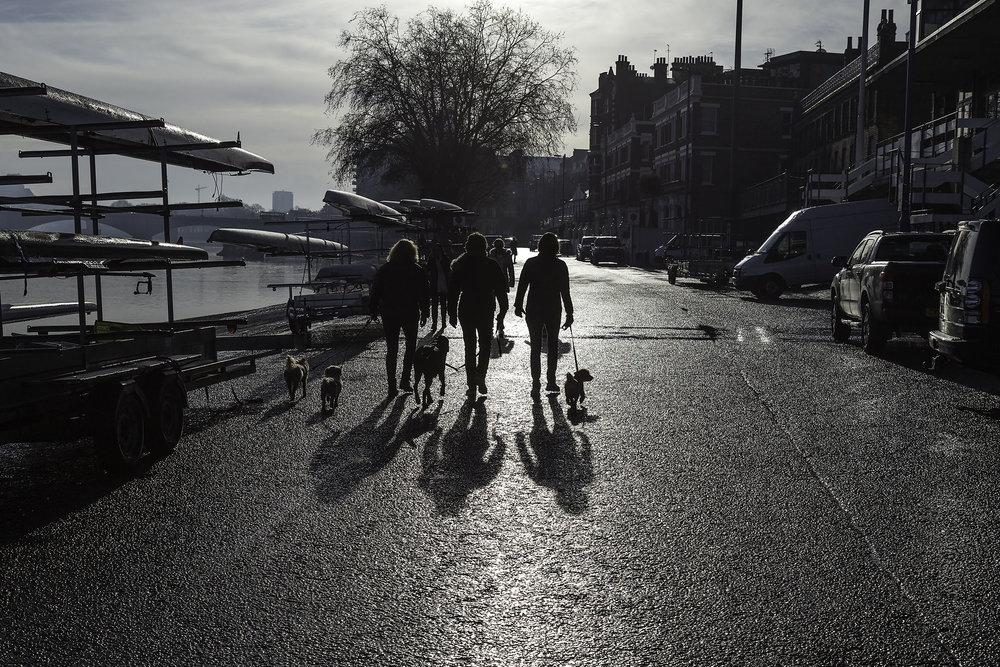 Walking the dogs Putney Embankment WR.jpg
