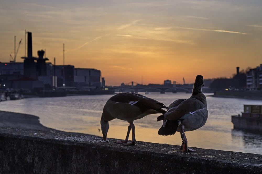 10 April main Sunset in Battersea Mar 5 WR.jpg