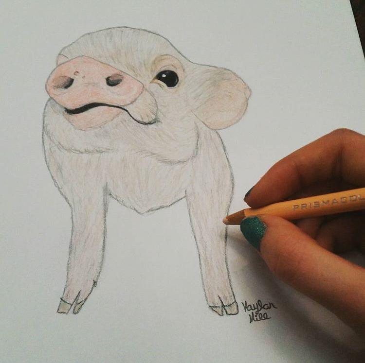@kaylans_drawings
