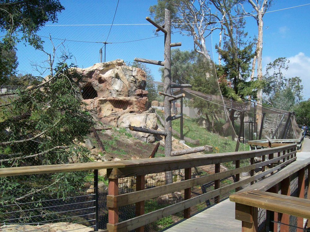 Zoo Condor1.jpg