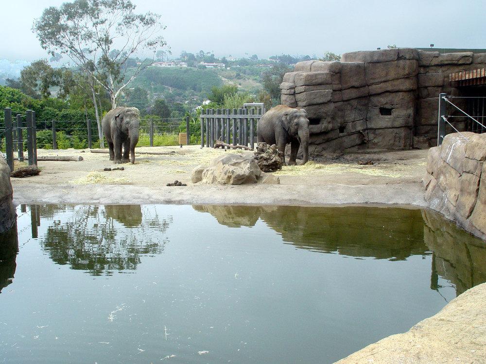 Elephant12.JPG