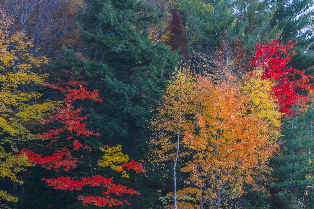 Fall Leaves in Muskoka