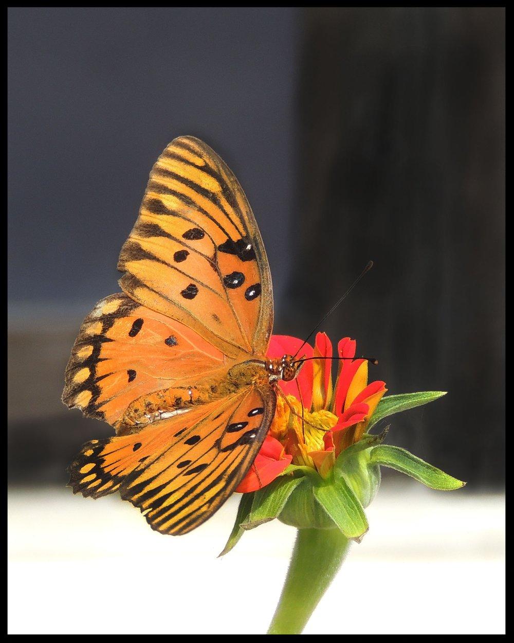 Sweet nectar.jpg