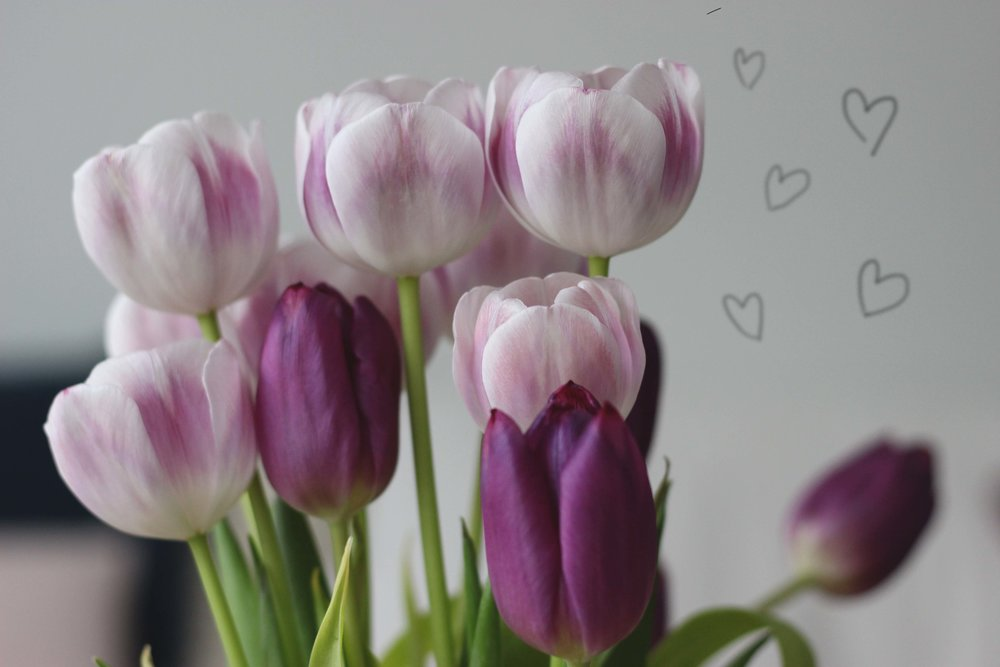 I love the colours of these tulips, especially the ones which look like they have been delicately brushed with paint.