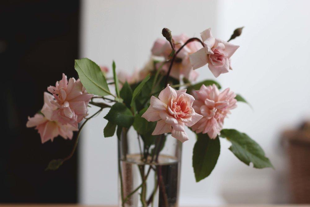 Roses02.jpg