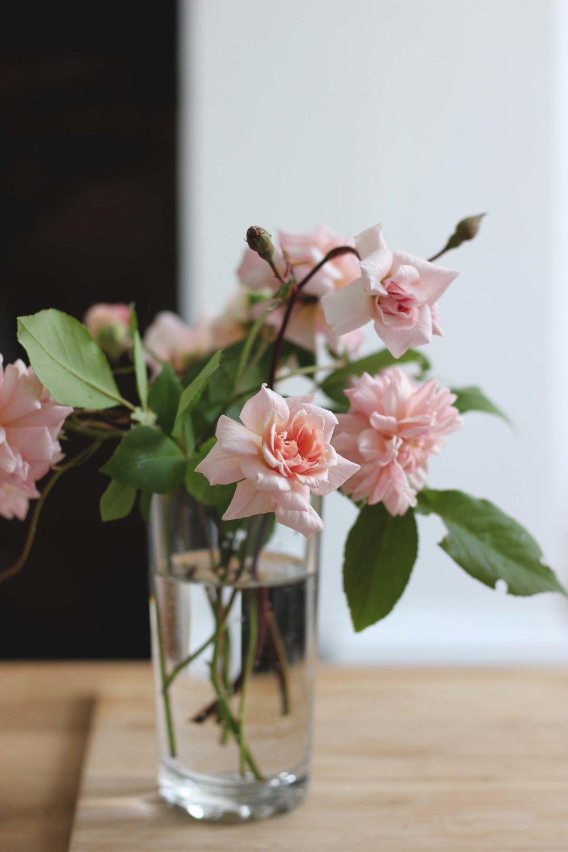 Roses16.jpg