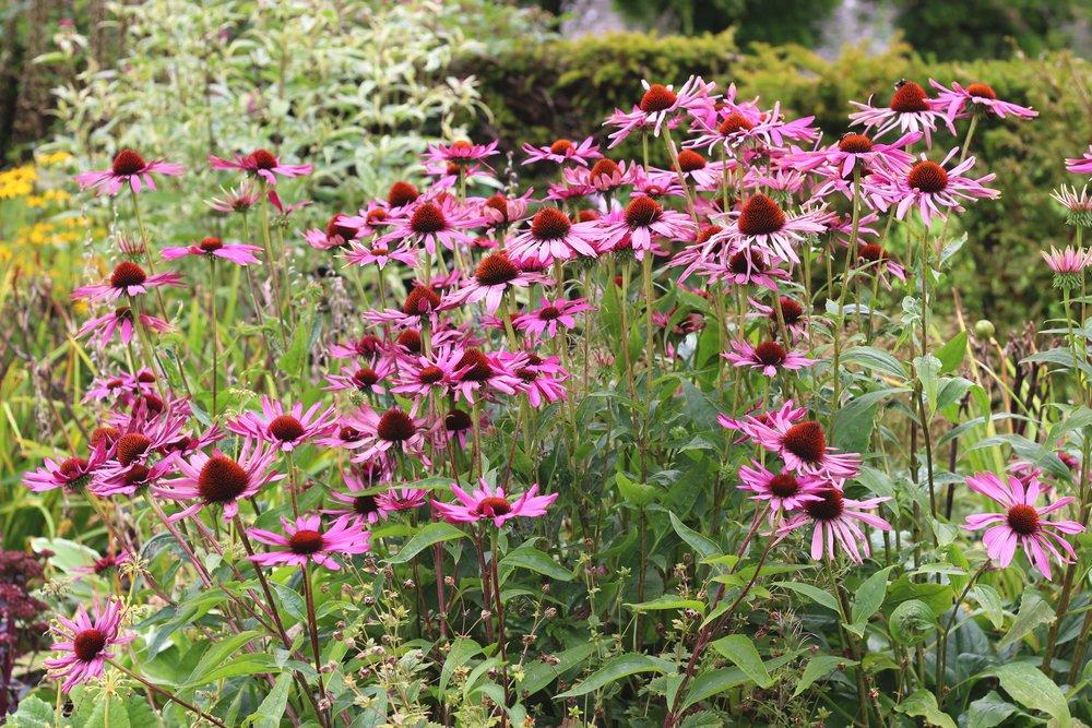 Flowers03.jpg