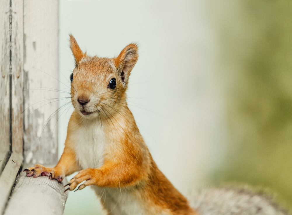 cute-squirrel-stay-staring-towards-the-camera-PYTTCXR.jpg