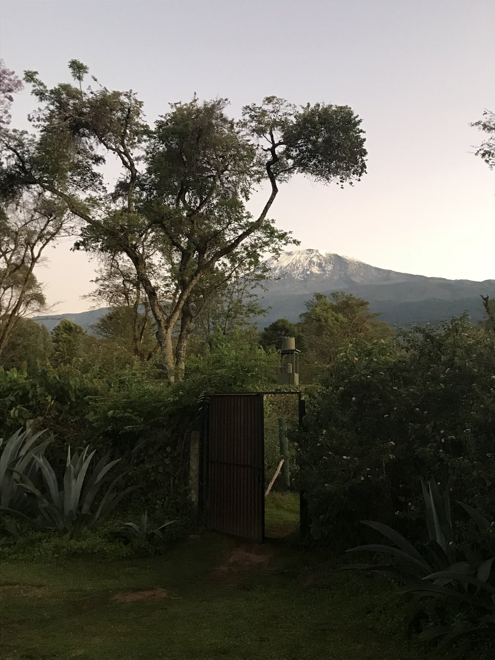 Good morning Mount Kilimanjaro!