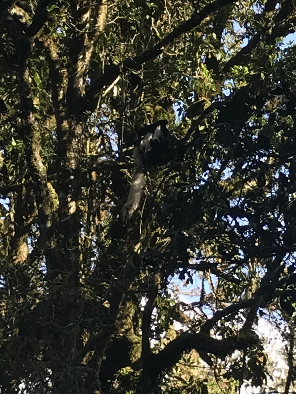 It is difficult to see but that is a monkey in the tree who we saw on our first day. :)
