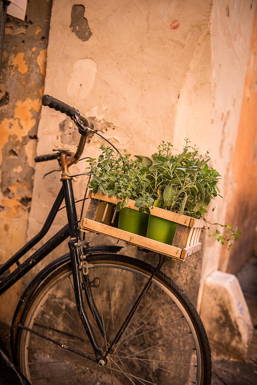 Roman Herb Bike