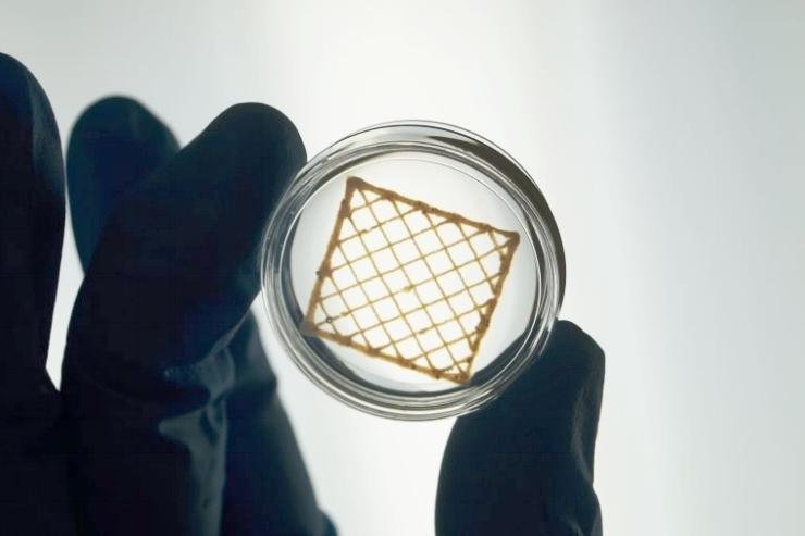 Figure 6: Bioprinted LifeInk200 scaffold. Image provided by Advanced BioMatrix.