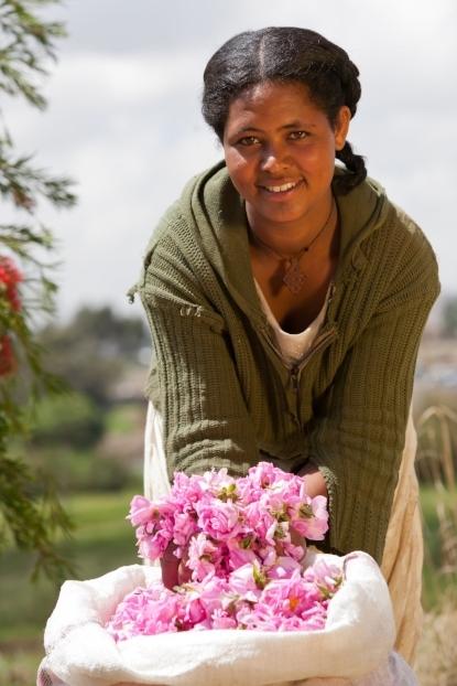 Rosenblüten, Äthiopien_Original_003.jpg