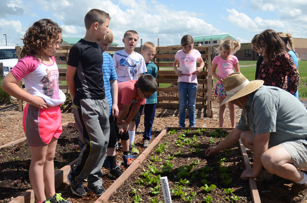 The garden club at Southern Boone Learning Garden examines a crop of buttercrunch lettuce in Ashland, Missouri on Wednesday, April 27, 2016. Once the food in the garden is harvested, it is taken into the lunchroom for students to eat.