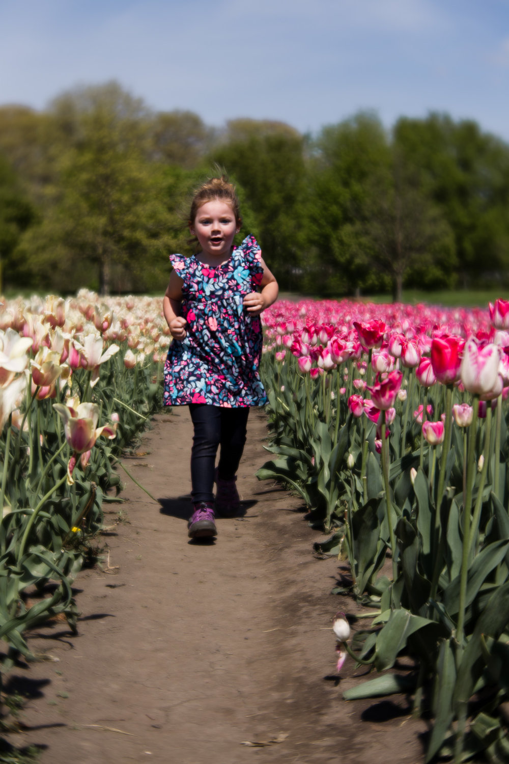 Kalamazoo-Photographer-Amanda-Schwab-Photography-Running-in-tulips