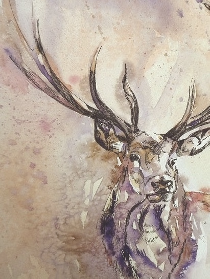 stag king -