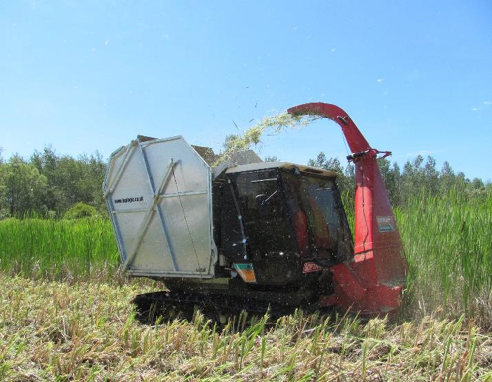 The Softrak harvester cutting and collecting cattail biomass at the Cheboygan experimental plots.