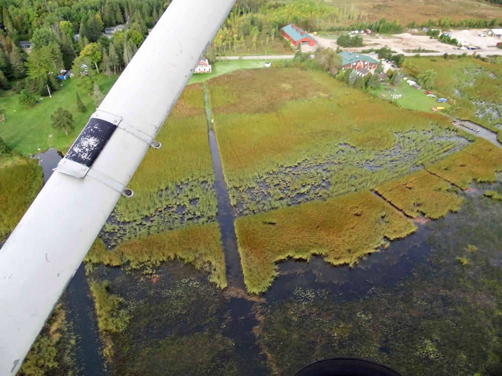 This aerial photograph shows the results of harvesting and crushing work conducted at Cedarville Marsh in Northern Lake Huron. Most of the visible vegetation is  Typha , though large clumps of  Carex aquatalis  are also visible in the area that had received crush treatment. The smaller channels were cut using aquatic weedwackers and should help increase access to the interior part of the marsh. While this work was not a replicated experiment, it shows how combining aquatic connectivity channels with other restoration methods can greatly improve the accessibility of invaded Great Lakes coastal wetlands.