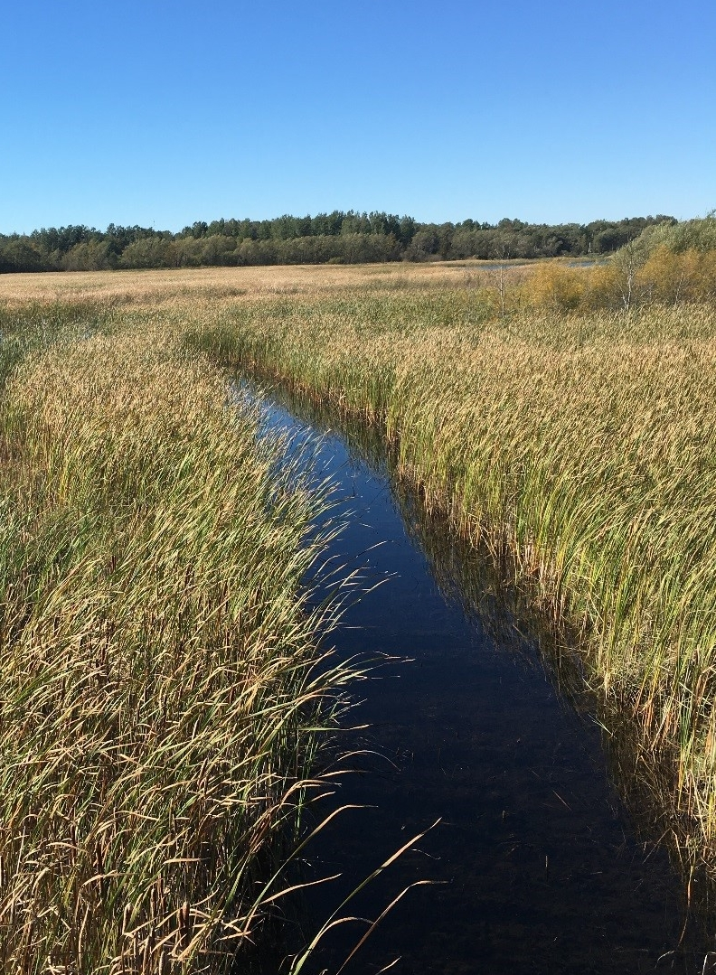 This shows one of the connective channels that leads out to a more open part of the wetland in Cheboygan Marsh.