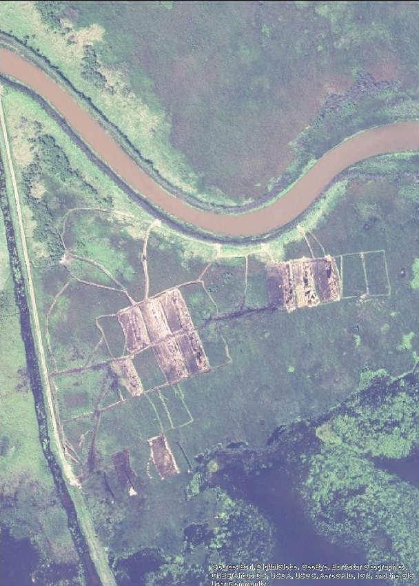This image from the National Agricultural Imagery Program shows Munuscong Marsh shortly after our experimental treatments were implemented.