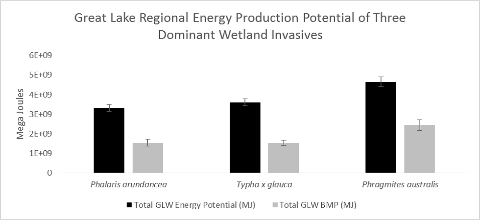 Total energy production potential in MegaJoules( 10e6joules) of Phalarisarundinacea, Typha×glauca, and Phragmitesaustralisfrom combustion and methane production. Black bars show potential energy using combustion and gray bats show potential energy gain using methane production.