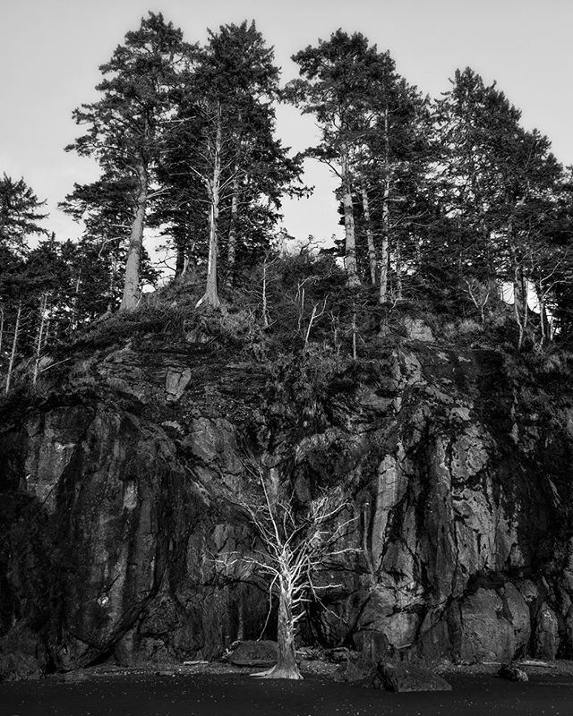 Life & Death #rubybeach #cliff #life #death #tree #cliffside #nature_wizards #blackandwhite #monochromatic #trees #beach #sand #rock #cliffs #fallen #nature #outdoors #explore #discover #adventure #hike #run #walk #wild #mg5k #stone #earth #naturephotography #landscape #naturelovers