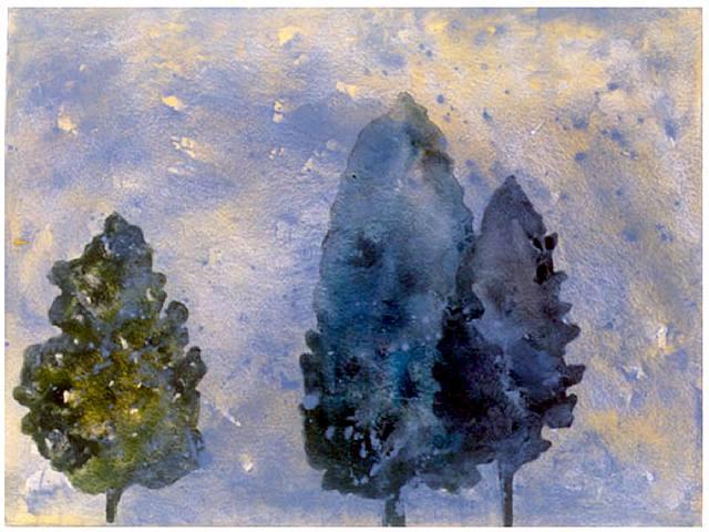 Dawn Fog Pines #1a