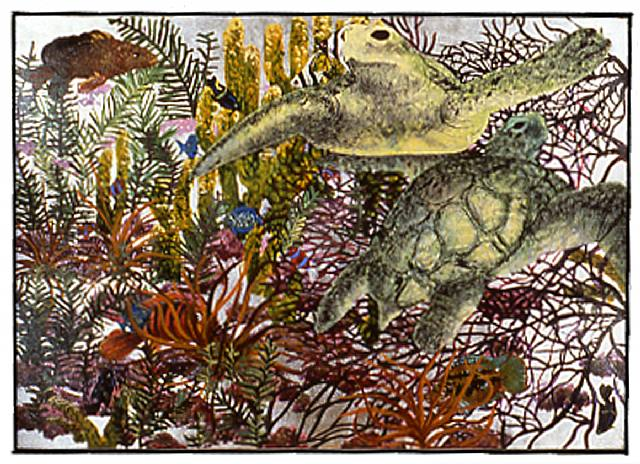 Silver-Turtle Reef