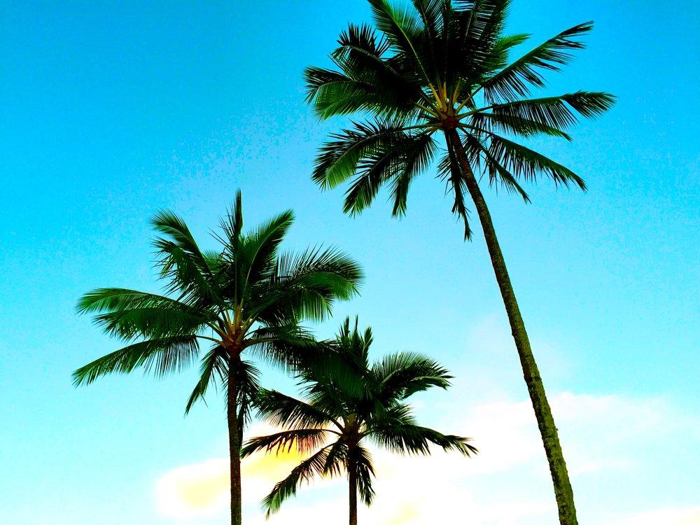 Palmtrees - tall blue sky.jpg