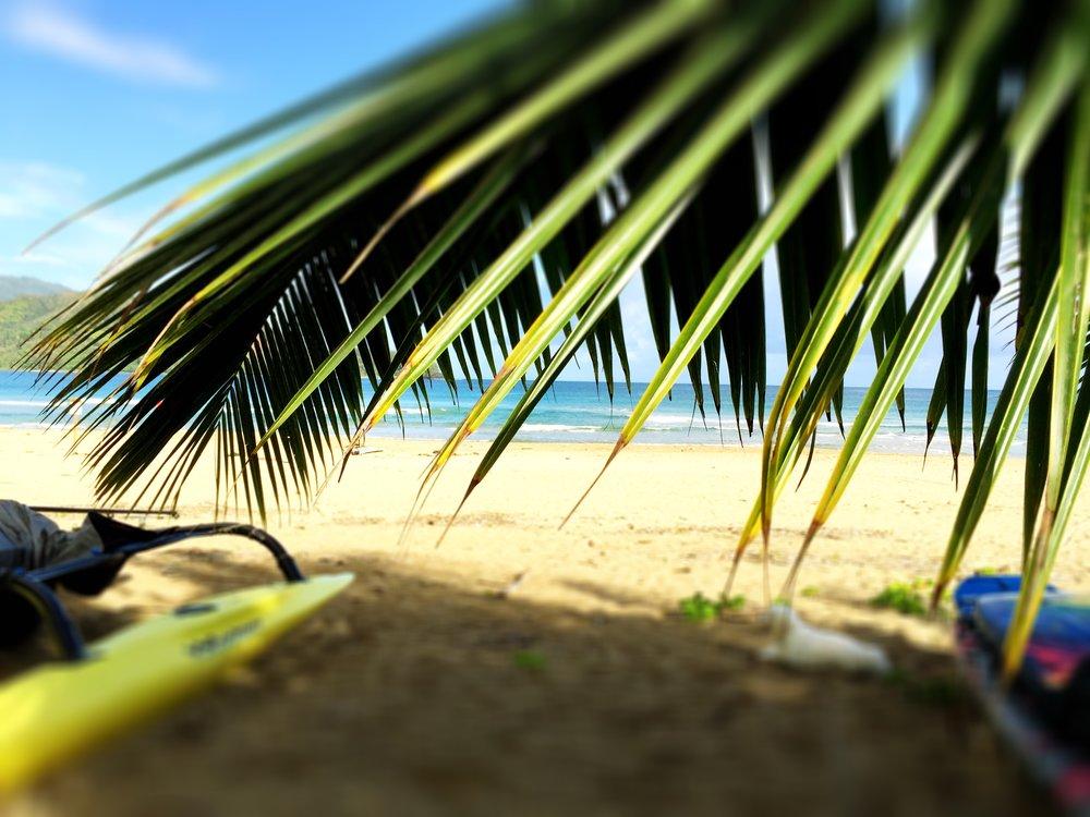 Hanalei Beach Kajak + Palm .jpg