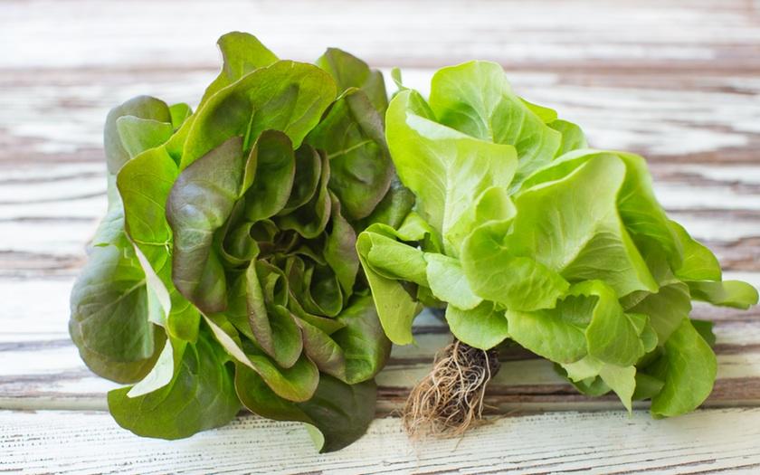 Jitk0mA4T7wTAlIQbatk_lettuce_03.jpg