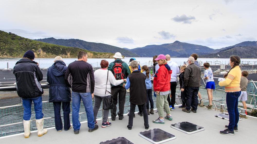 Checking out the King Salmon Ruakaka Salmon Farm