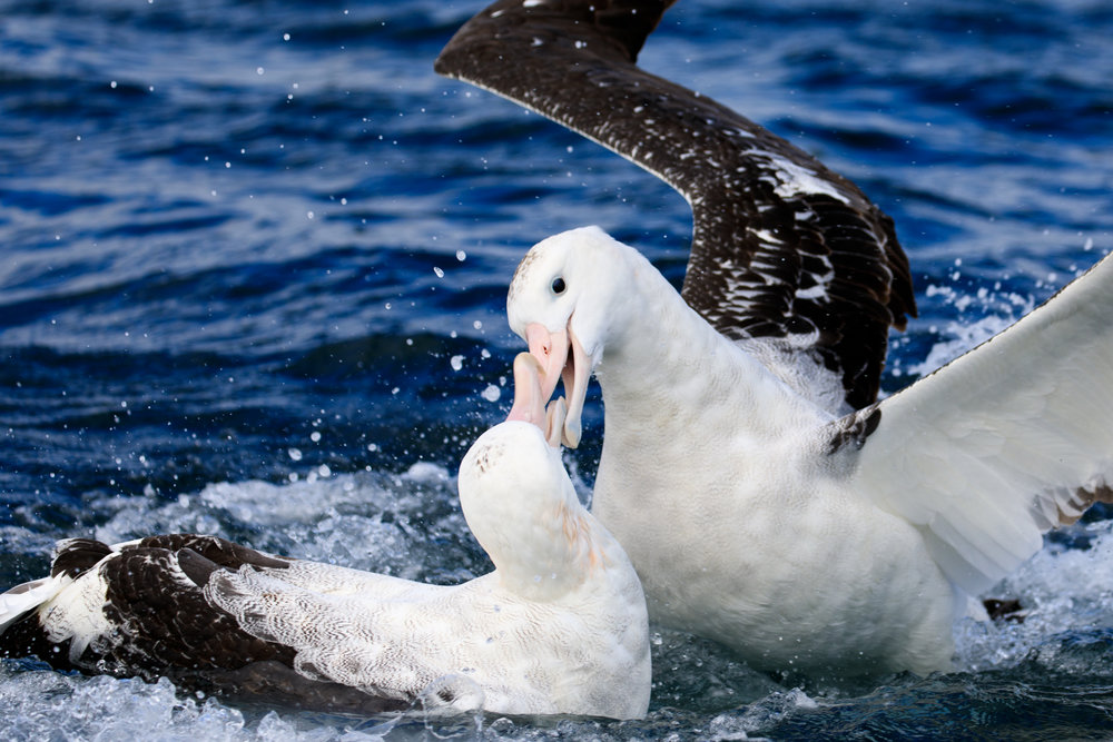 Seabird squabbles