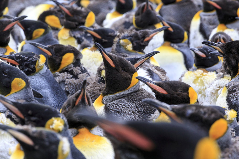How many penguins do you need to make a good image?