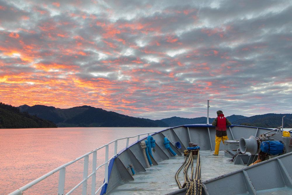 Tamzin Henderson - Otakou Sealord Cook Strait 2018 Sunrise.jpg