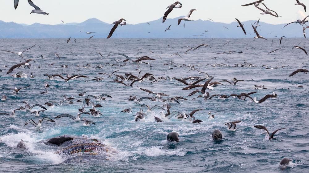 Tamzin Henderson - Otakou Sealord Cook Strait 2018 Trawl Bag.jpg