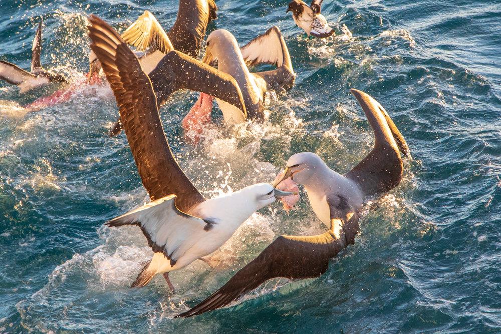 Tamzin Henderson - Otakou Sealord Cook Strait 2018 Food Fight.jpg