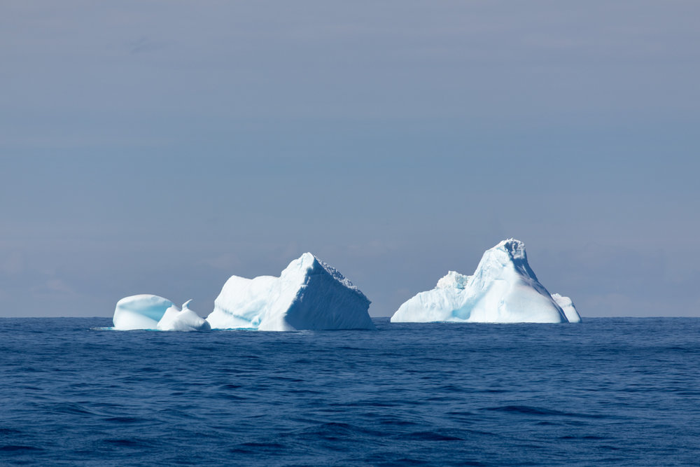 Icebergs!