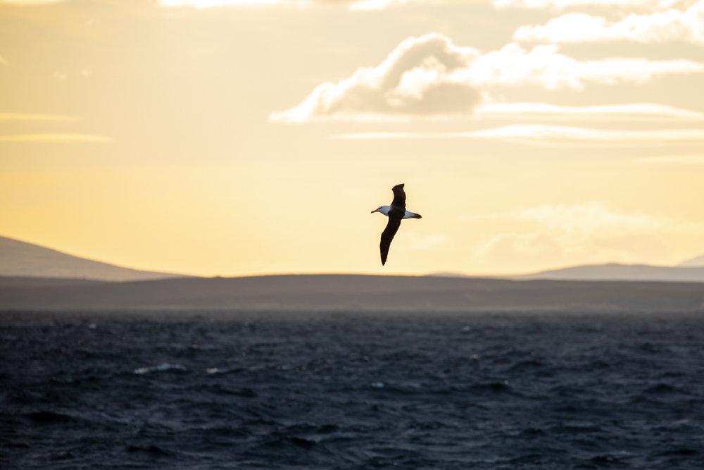 Sunset leaving the Falklands