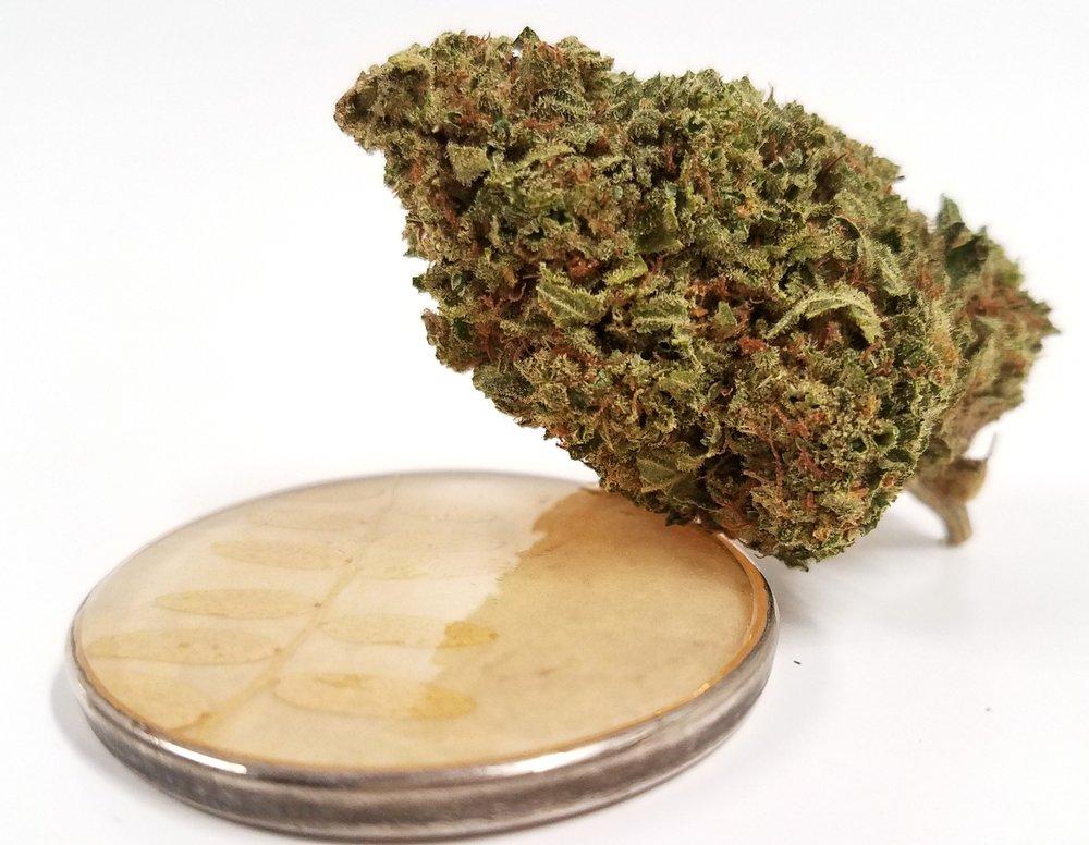 Sour Banana Sherb. grown by Cascade Valley Cannabis