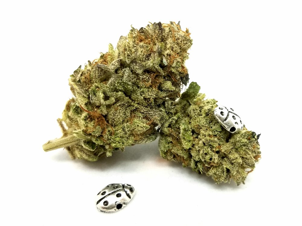 SOG Chemical Cookies grown by Sons of Agronomy