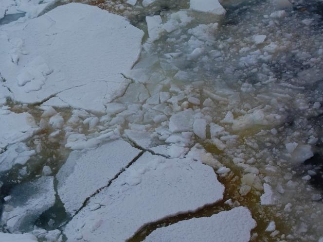 Ice Algae