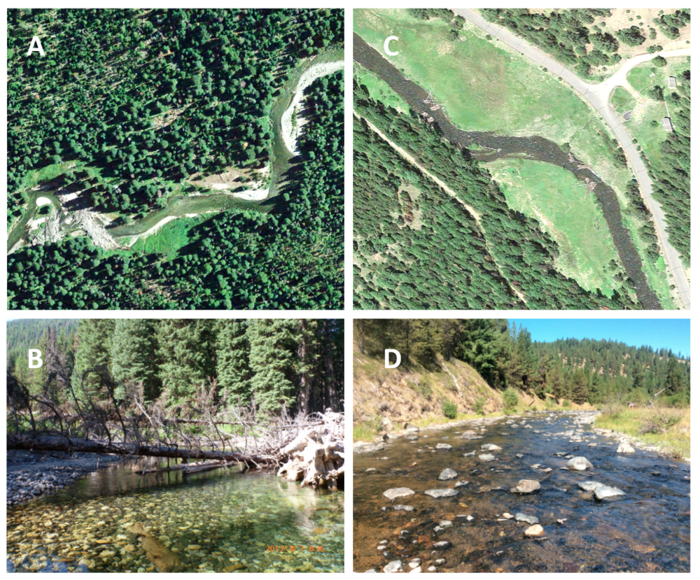Illustration of channel complexity in a wilderness versus modified stream.  Stream channel complexity contrasted in two watersheds including the Minam River—a designated wilderness area representing historical conditions—as seen from  (A)  aerial photography and  (B)  ground photography in 2013, and a simplified and unnaturally widened stream channel in the heavily impacted upper Grande Ronde River as seen from  (C)  aerial photography and  (D)  ground photography in 2015. Aerial images courtesy of Google Earth; ground images courtesy of the Columbia Habitat Monitoring Program. DOI:  https://doi.org/10.1525/elementa.192.f1