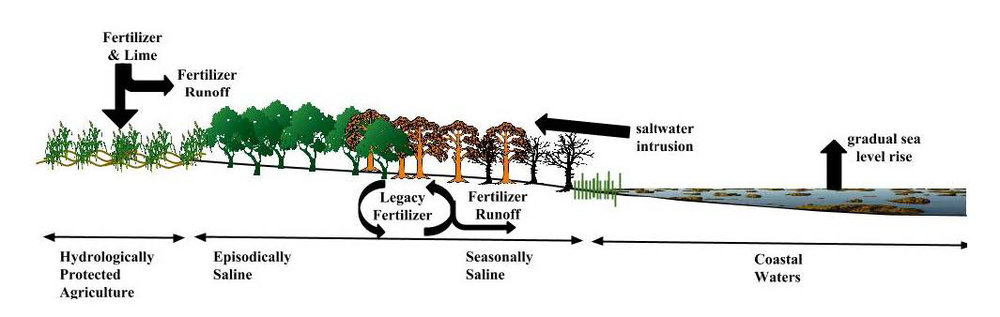 Conceptual diagram of upstream and downstream stressors affecting wetland restoration sites in the coastal plain of the US. DOI:  https://doi.org/10.1525/elementa.236.f1