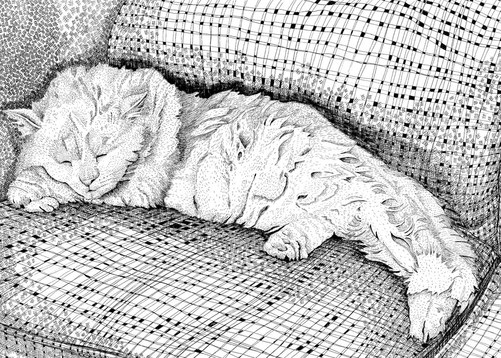 White Cat, 2016