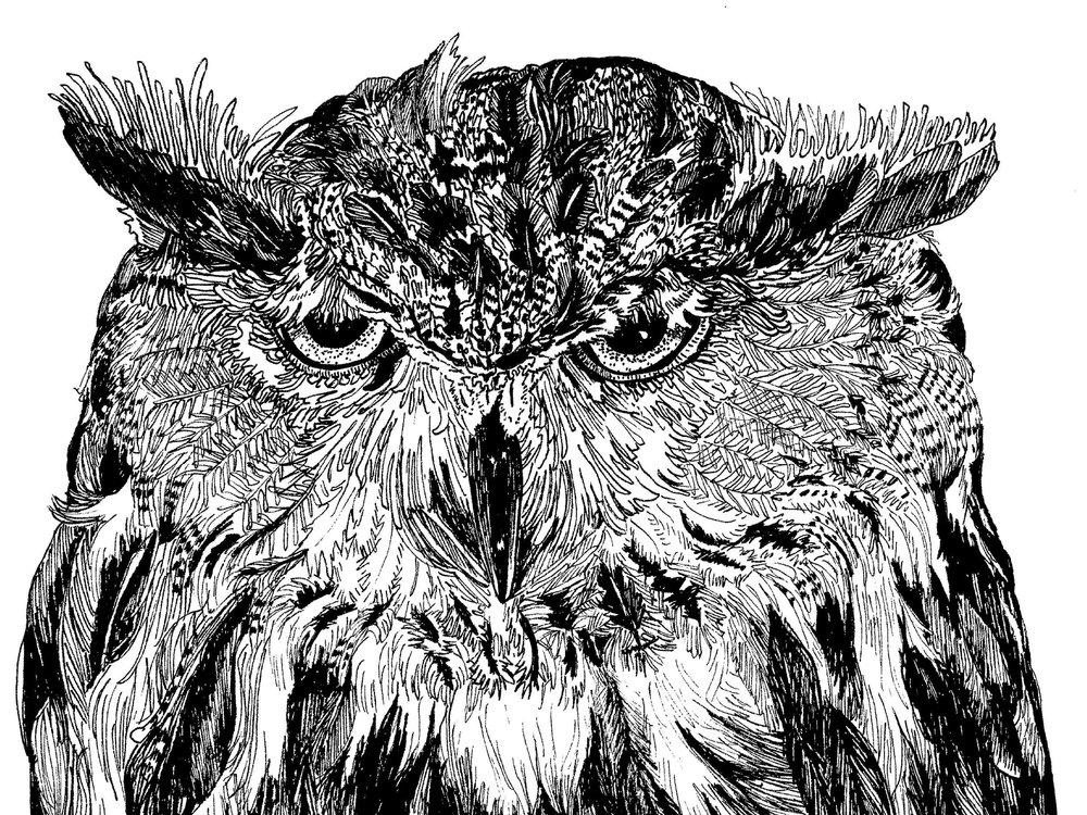 cranky owl.jpg