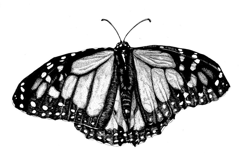 Monarch 1.jpg